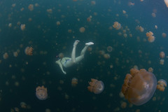 kozy swimming through jellyfish (kozyndan) Tags: palau jellyfishlake jellyfish snorkel underwater swim medusa paradise marinelake lake pacific kozy