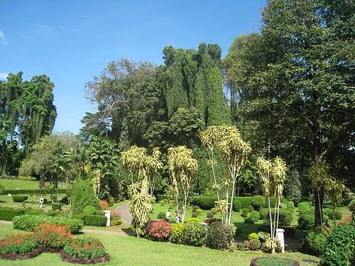 Kandy giardino botanico