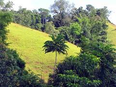 IMG_5258fr (Mangiwau) Tags: indonesia gold mercury air traditional mining rush illegal mineral exploration indonesian emas frenzy alam kantor peti nur alluvial rumbia raksa kendari dulang sultra eksplorasi gubernur pertambangan merkuri colluvial bombana
