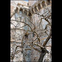 Castello Aragonese RC (Antudo) Tags: italia sony reggiocalabria 350 alpha tamron albero castello bruno calabria castelloaragonese tamron18200 antudo
