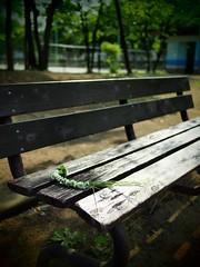 忘れ物 (Simon*N) Tags: park japan bench lumix tokyo olympus 日本 風景 omd 日常 m43 em5