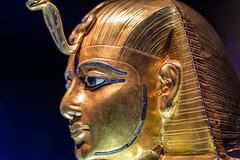 Tut (chimerasaurus) Tags: kingtut egypt tut seattlecenter tutankhamun pacificsciencecenter seattlewa