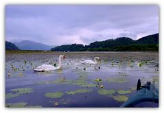 Simple Nature (Nicolas Valentin) Tags: blue light sky mountain lake clouds landscape freedom scotland swan scenery loch wilderness lomond lochlomond ecosse