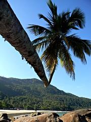 Outra perspectiva do coqueiro (NatiLady) Tags: trip summer sun mountains verde green sol praia beach island rocks vero ilha pedras montanhas coqueiro 2012 aventureiro