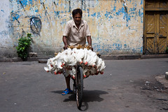 trying to fly (matias leturia) Tags: india calcuta agosto2012