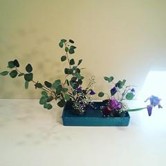 Yukino 's #ikebana