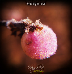 Searching For Detail (majidge4) Tags: pink detail macro ice nature water photography frozen zoom microscopic searching