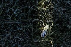 Pasque Flower in a Shaft of Morning Light (Daniel Trim) Tags: sunset plants plant flower nature sunrise easter spring common pasqueflower pasque vulgaris pulsatilla wildife therfield