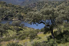 Naturaleza espaola (ramosblancor) Tags: naturaleza nature ro forest river landscape paisaje bosque monfrage extremadura holmoak encina quercusilex mediterraneanforest titar montemediterrneo