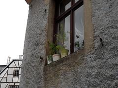 Fensterbrett (onnola) Tags: flower window germany deutschland fenster plaster pot windowsill blumentopf rheinlandpfalz fensterbrett putz westerwald hhrgrenzhausen rhinelandpalatinate westerwaldkreis