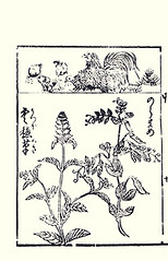 Top  domestic fowl; Bottom - heal-all and pea (Japanese Flower and Bird Art) Tags: flower bird japan japanese book picture domestic fowl fabaceae pea anonymous gallus woodblock prunella vulgaris lamiaceae ukiyo phasianidae healall pisum sativum readercollection