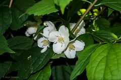 Belleza sobria (Jesús Simeón) Tags: madrid flores flor 花 華 꽃 草花 一花 꽃들 understatedbeauty bellezasobria 控えめな美しさ 절제된아름다움