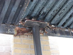 ROOF ROT (richie 59) Tags: city school urban usa ny newyork building america buildings constructionarea campus us spring construction unitedstates weekend sunday highschool midtown kingston newyorkstate constructionsite nys nystate hudsonvalley kingstonny 2016 ulstercounty schoolbuildings smallcity schoolcampus midhudsonvalley americancity midhudson ulstercountyny uscity 2010s kingstonhighschool richie59 midtownkingstonny midtownkingston may2016 may222016