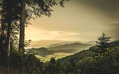 foresight (simonpe86) Tags: trees mountains green landscape berge grn freiburg landschaft bume schwarzwald blackforest rosskopf