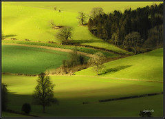 Sweeping Shadows. (Picture post.) Tags: trees sunlight green nature landscape interestingness gate shadows sheep tracks fields crops paysage arbre hedges