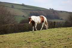Calver 053 (Slimboy Fat) Tags: derwentvalley calver derbyshire england uk