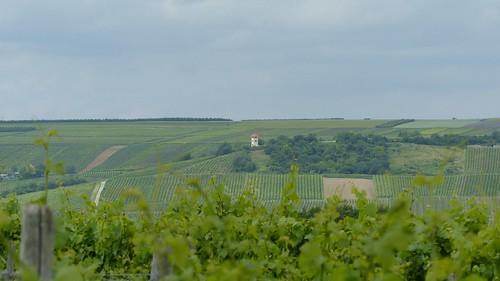 Wandern in Rheinhessen