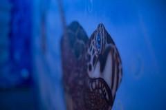 Unterwasserwelt, Schilda (Konrad Geldhauser) Tags: spray partykeller schildkrte gesprht konradgeldhauser