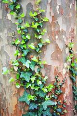 IMG_4497 (Irina Souiki) Tags: parcdesceaux france paris sceaux flowers nature parc park