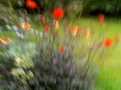 A moving arrangement (W.P.K) Tags: life red orange flower holland color green netherlands dutch yellow painting photography photo moving still bright stock nederland flowing impressionist shaking arrangment stockphoto stockphotography goudriaan wpk wpk2