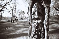 Arborface (Mike.Geiger.ca (Myke)) Tags: toronto ontario canada tree face highpark cherryblossom sakura visage weirwood