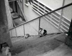 Cat brother (GMilo) Tags: pentax 6x7 efke 105mm r100