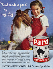 Pard (dok1) Tags: dog pets collie pard saturdayeveningpost dok1