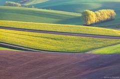 Spring Colors (Irene Becker) Tags: morning sunrise landscape spring europe land czechrepublic cz skalka moravia colza eskrepublika eskrepublika jihomoravsk bestcapturesaoi irenebecker irenebeckerorg