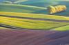 Spring Colors (Irene Becker) Tags: morning sunrise landscape spring europe land czechrepublic cz skalka moravia colza českárepublika èeskárepublika jihomoravský bestcapturesaoi irenebecker irenebeckerorg