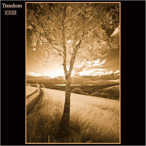 2012 06 08 Treedom XXIII