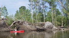 109_2043 - Copy (Dave Garvin) Tags: trip river canoe damage tornado huron