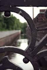 (ms holmes) Tags: detail berlin river canal vanishingpoint stream background depthoffield bach ornament kanal fluss balustrade hintergrund shallowdof gelnder spinnweben cobwebbed canoneos1000d