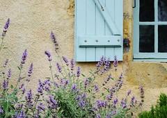 My Window (Tinina67) Tags: france reflection window rose garden sage rosemary tina herb glas seissan tinina67 aumarron