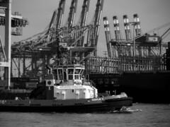 heading to the next pull (mahohn) Tags: bw water ship harbour crane hamburg 43 flickraward