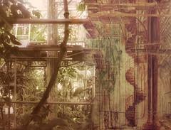 Present and Past - Restauration Palm House Vienna - Diptych a Photography and a Watercolour - Palmenhaus Schnbrunn Wien 2012 and 1986 - 1990 (hedbavny) Tags: schnbrunn vienna wien architecture watercolor painting austria photo sterreich diptych fenster pflanze surreal meeting baustelle artnouveau painter watercolour architektur scaffold grn braun renovation bauwerk bltter buildingsite palme merge achitecture renovierung cooperation zusammenarbeit jugendstil dialog vergangenheit austausch palmenhaus aquarell maler restauration diptychon sule sehenswrdigkeit regenwald jahrhundertwende gerst restaurierung wendeltreppe glashaus findesicle surrealismus gegenwart pictorialism unterschied bergang zeitsprung wienvienna glasscheiben gegenberstellung sterreichaustria palmenhausschnbrunn fotobearbeitung scaffolded eklektizismus touristenattraktion wienum1900 berschneidung instandhaltung parallelitt piktorialismus hofarchitekt ineinandergreifen eklektisch gnterfritsch zeitverschmelzung franzsegenschmid