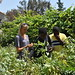 Amy Smart and students harvesting fava beans