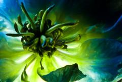 ~ 192 ~ (Daniel Vicario) Tags: flower macro green petals energy hidden soul stamen backlit lit delicate universe maths femenine feminity specnature