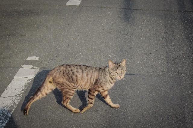 Today's Cat@2012-06-01