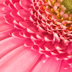 Flower (Matt H. Imaging) Tags: pink flower closeup dimage a2 konicaminolta doublefantasy dimagea2 matthimaging