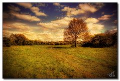 Walsall Arboretum (rjt208) Tags: park trees texture nature wildlife arboretum fields extension westmidlands pathway walsall rjt208