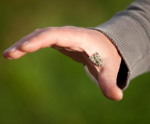Moth Hand
