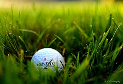 """In the rough""  (bad lie) (Darrenlr) Tags: light sun game green sports grass 35mm ball golf nikon bokeh course dimple sphere round theme rough fairway nikkor links blades 52 d90 badlie 2552 1stcut nikond90 topflight 52weeks2012"