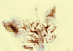 """i'm mad at you"" (William Keckler) Tags: cats art digital cat digitalart kitty kitteh angry kitties mad pissed angrycat madcat miffed digitalcat digitalkitty"