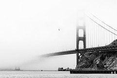 Fog (morozgrafix) Tags: california bw bird water fog bay blackwhite unitedstates goldengatebridge sausalito nikon2470mmf28g nikond7000