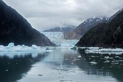 _MG_4970a (markbyzewski) Tags: alaska ugly iceberg tracyarm southsawyerglacier