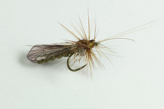 J:son winged caddis (Masi Hast) Tags: flyfishing flytying