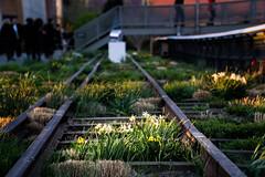 Web High Line spring 7 (mtschappat@verizon.net) Tags: nyc high sony line software nik a6000