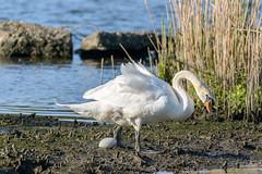2016mei05_Biesboschhemelvaart_5283 (wil.vangorp) Tags: biesbosch