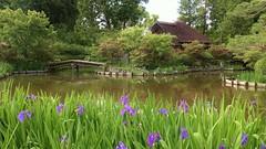 Spring Pond / Kyoto Umenomiya Taisha (maco-nonchR) Tags: spring pond kyoto  manualexposure   allmanual sakuyaike