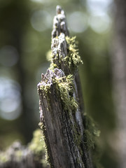 21 May 16 Moss Collector (ethanbeute) Tags: forest colorado hiking hike coloradosprings hikingtrail pikenationalforest greenmountainfalls forested foresttrail catamounttrail catamountreservoir catamountcreek